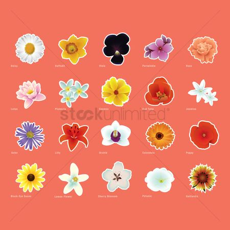 Red : Various flowers