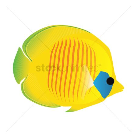 Marine life : Yellow fish