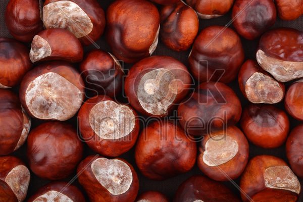 chestnut on wooden background - studio shot stock photo