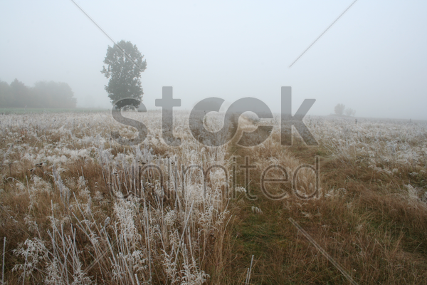 view of frozen grass on meadow stock photo
