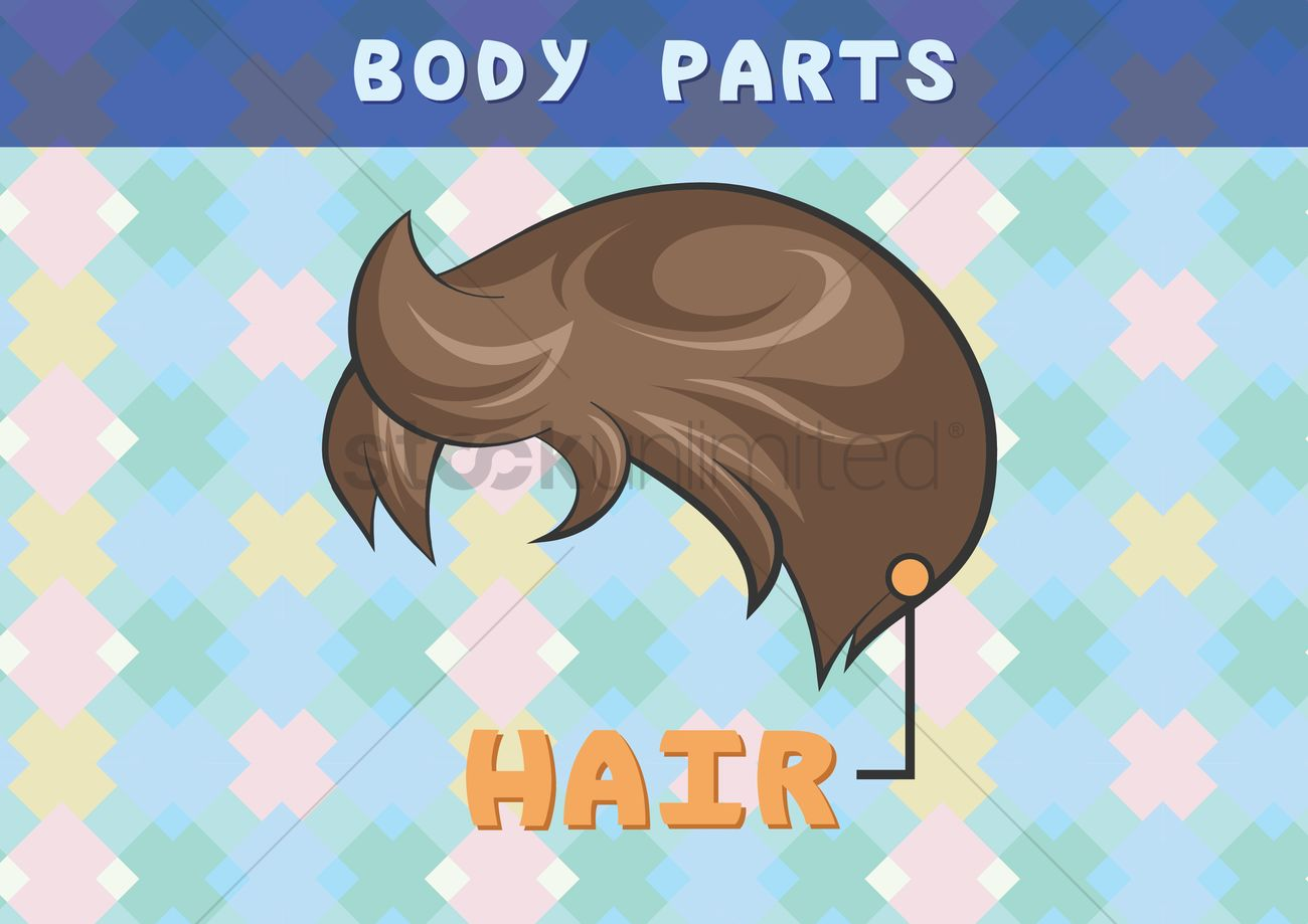 Body parts chart for hair Vector Image - 1396500 | StockUnlimited