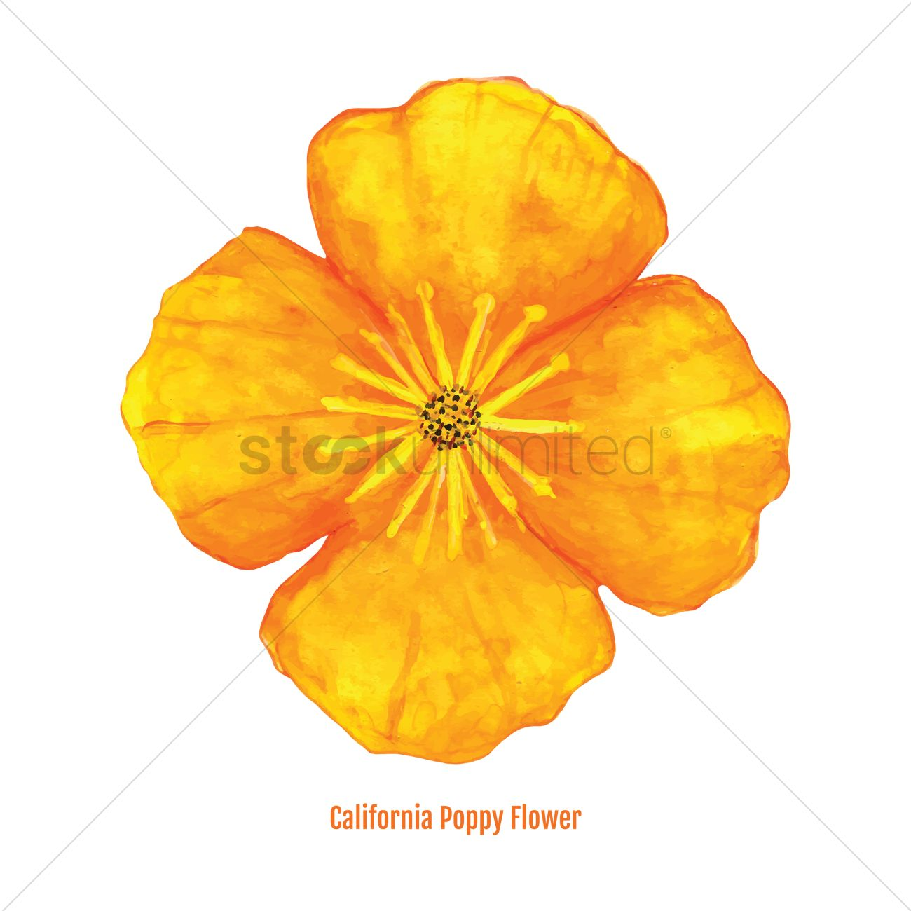 Free California Poppy Flower Vector Image 1606412 Stockunlimited