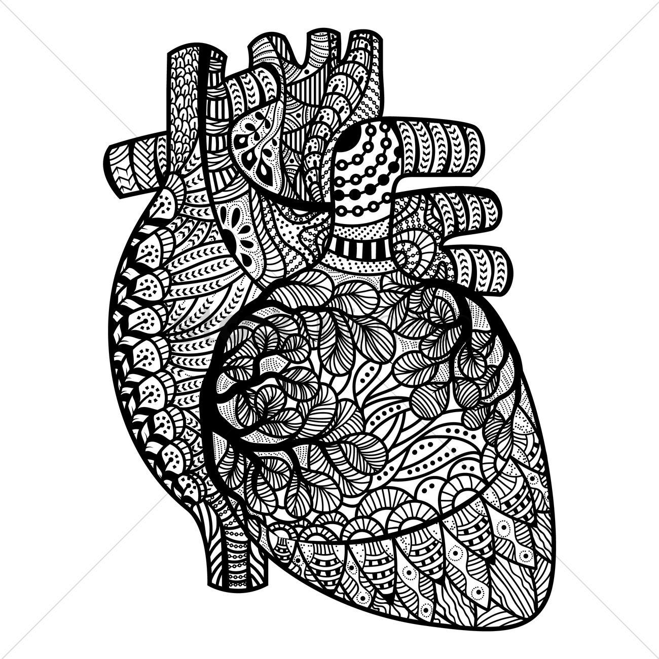 Heart Line Art Design : Intricate human heart design vector image