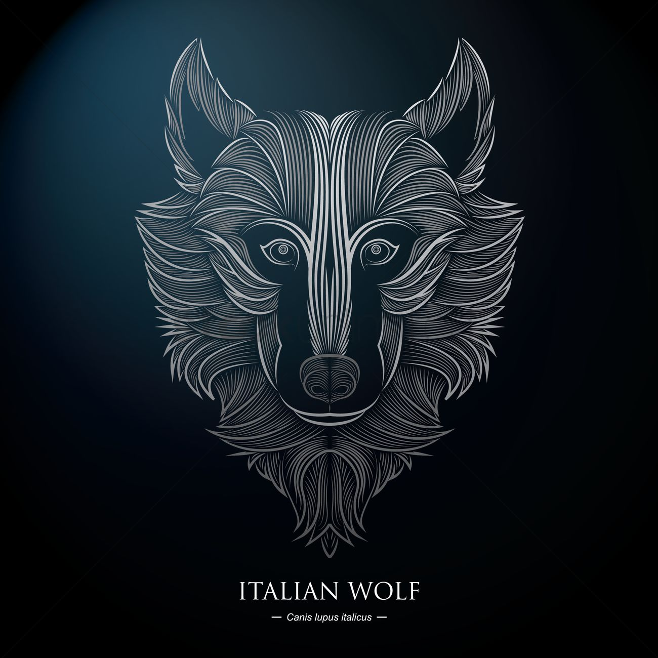 Italian Wolf Background Vector Image 1576100 Stockunlimited