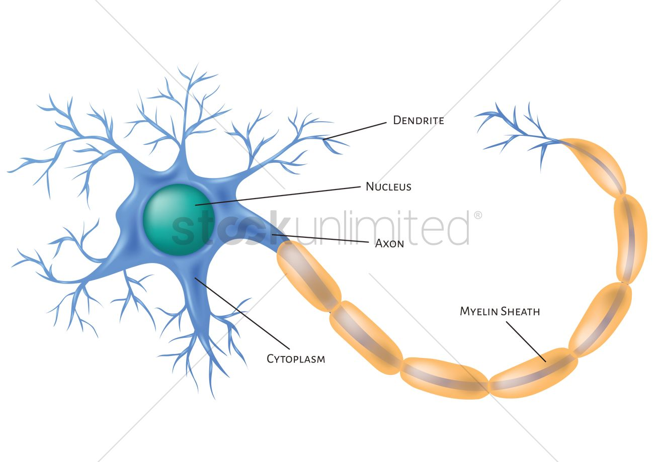 neuron cell vector graphic