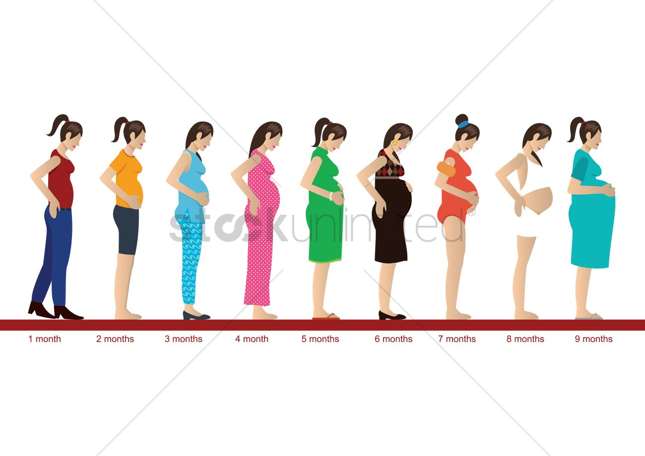 Pregnancy Stages Month By Images