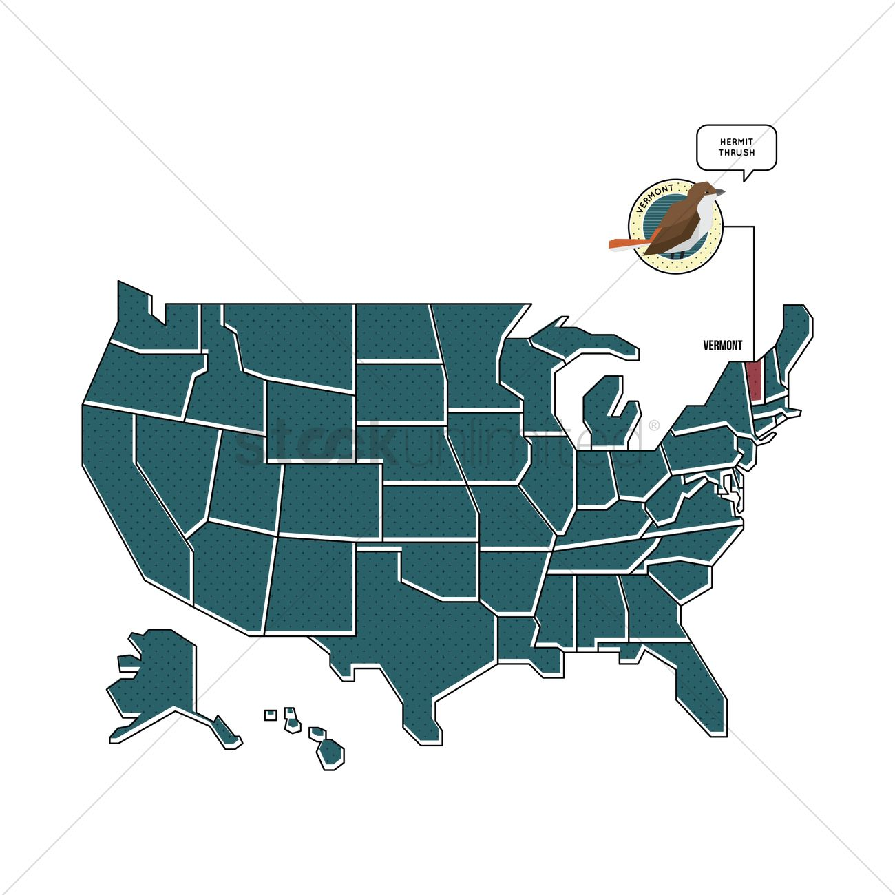 Us map with vermont state bird Vector Image - 1567480 | StockUnlimited