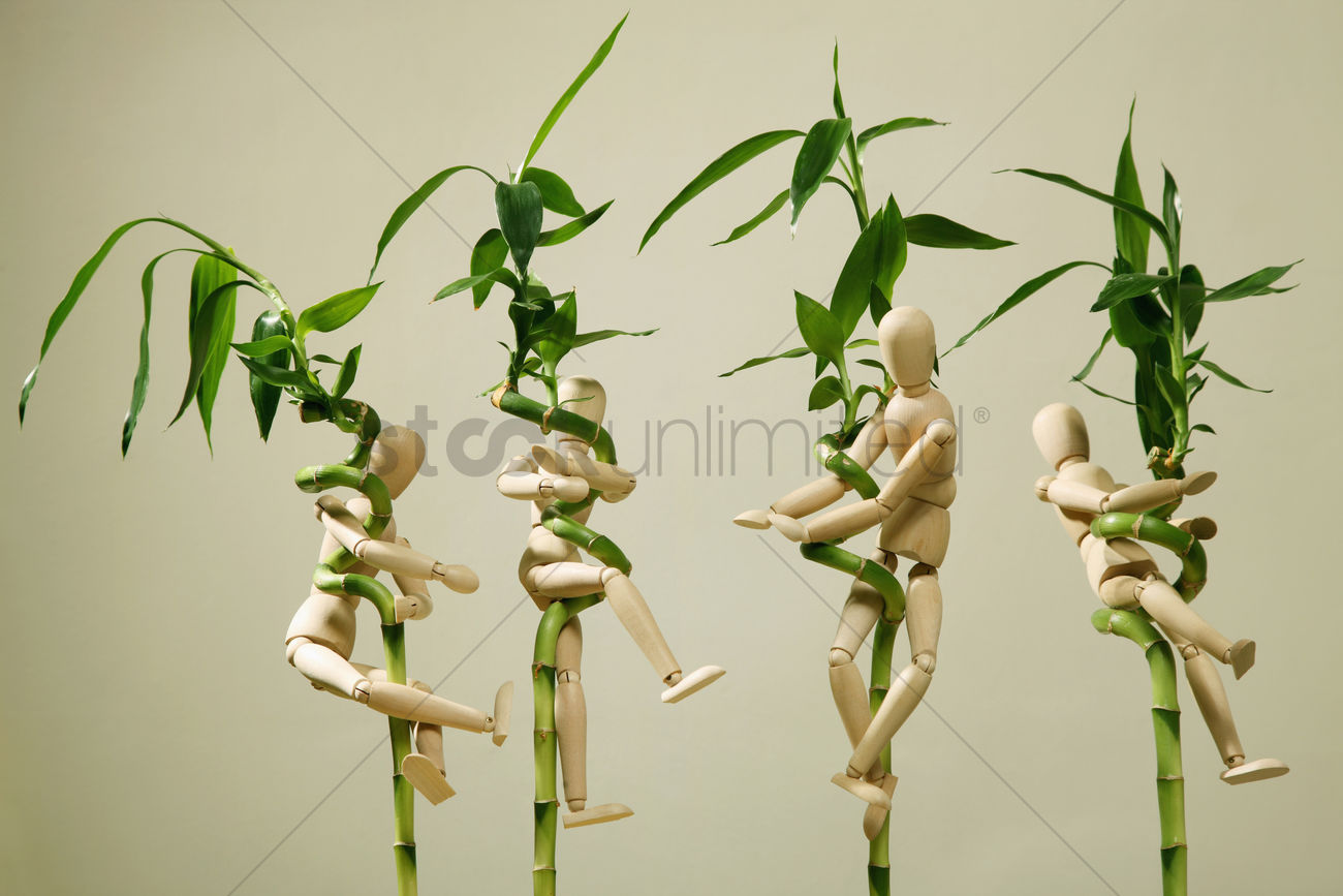 Wooden Dummies Clinging Onto Lucky Bamboo Plants Stock Photo 1682724 Stockunlimited