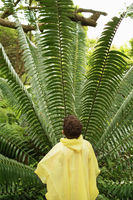 Boy looking at large fern