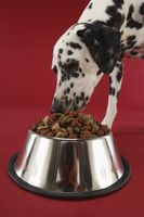 Dalmatian dog eating from dog bowl