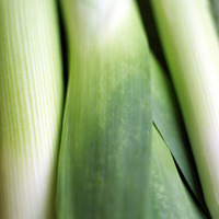 Popular : High angle close up of leeks