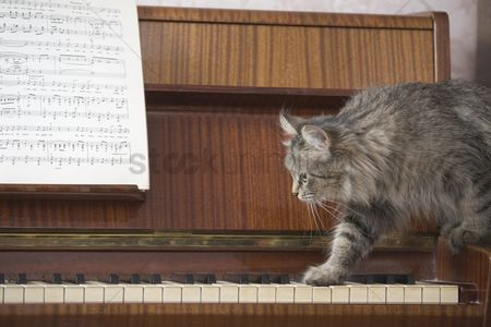 Careful : A piano with a sheet of music and a cat stepping onto the piano keys