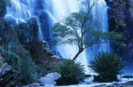 Trees : Australia waterfall in forest