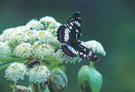 Animal : Butterfly stopping on plants