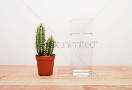 Houseplant : Cactus houseplant next to a full glass of water