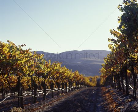 Land : Californian vineyard