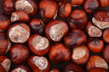 Outdoor : Chestnut on wooden background - studio shot