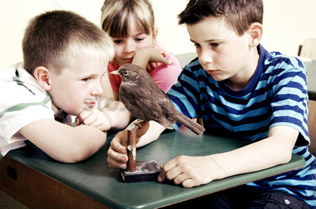 Wondering : Children looking at a model bird