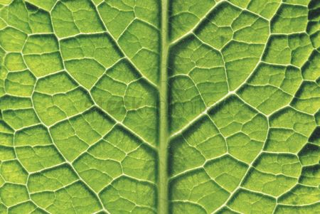 Texture : Close-up of leaf
