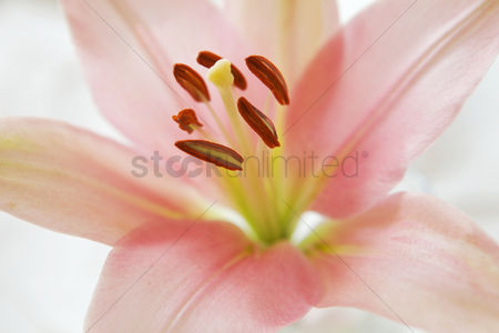 Flower : Close-up of pink flower