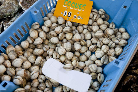Large group of animals : Close-up of shellfish in container at store