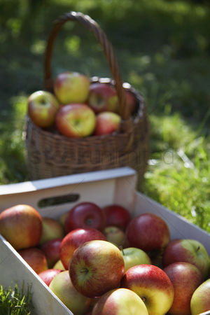 Grass : Crate and basket of apples on grass