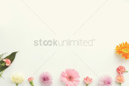 Blossom : Decorative flower design with blank space
