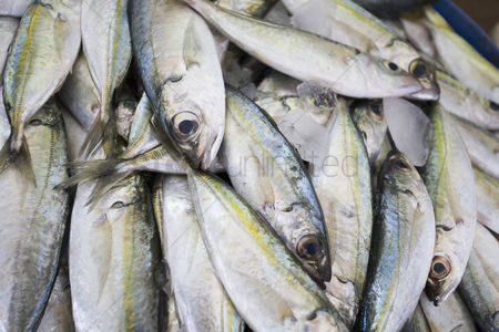 Large group of animals : Dubai uae fresh fish for sale at shindagha market in bur dubai
