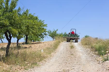 Land : Farmer drives tractor on hillside with olive grove