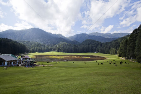 Large group of animals : Farmhouses and animals in a field  khajjiar  chamba  himachal pradesh  india