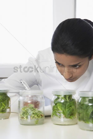 Examination : Female lab worker examining glass jars with plant material recording observations