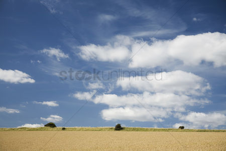 Land : Field and sky with clouds