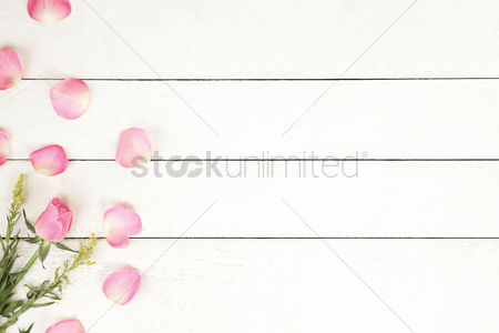Floral : Flatlay of background with pink rose