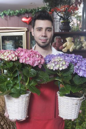 Houseplant : Florist stands with two hydrangea