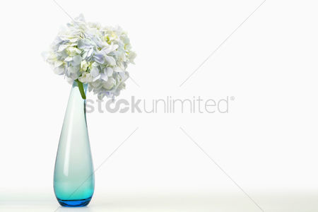 Blossom : Flowers in a vase