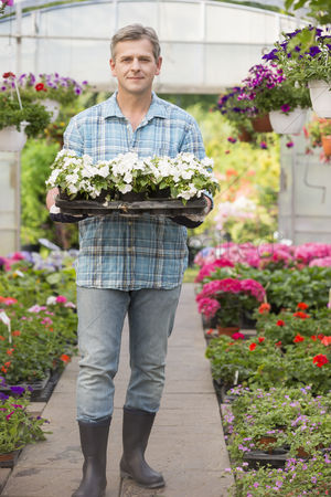 Greenhouse : Full-length portrait of gardener carrying crate with flower pots in greenhouse