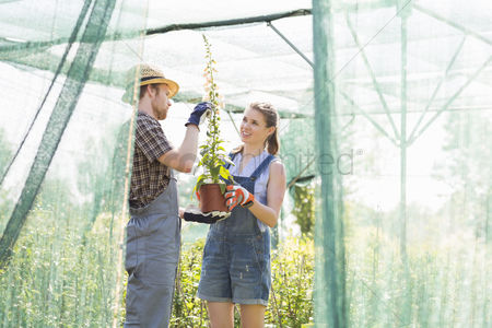 Greenhouse : Gardeners discussing over potted plant at greenhouse