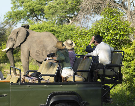 African wildlife : Group of tourists on safari watching elephant