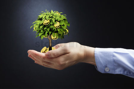 Conceptual : Hand showing money growing on a tree