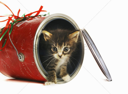 Background : Kitten coming out from an opened can