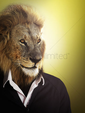 Lion : Lion dressed up with a shirt and jumper