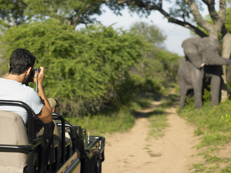On the road : Man on safari taking photograph of elephant back view