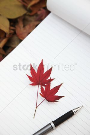 Notepad : Maple leaves and pen on notepad