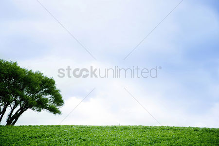 Flat : Meadow and blue sky
