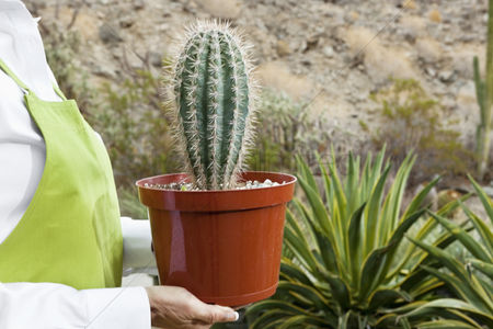 Greenhouse : Midsection of a senior woman holding potted cactus plant