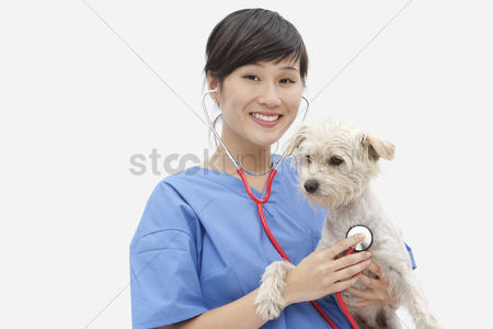 Domesticated animal : Portrait of asian female veterinarian examining dog over gray background