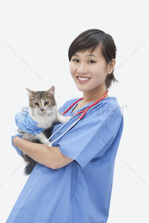 Domesticated animal : Portrait of asian female veterinarian holding cat over gray background
