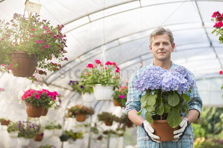Greenhouse : Portrait of confident gardener holding flower pot in greenhouse