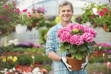 Variety : Portrait of happy gardener holding flower pot in greenhouse