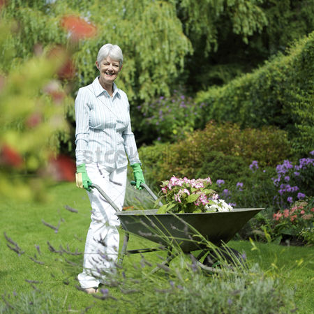 Mature : Senior woman pushing a wheelbarrow of plants in the garden